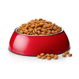 Dry Cat Food - Any Brand